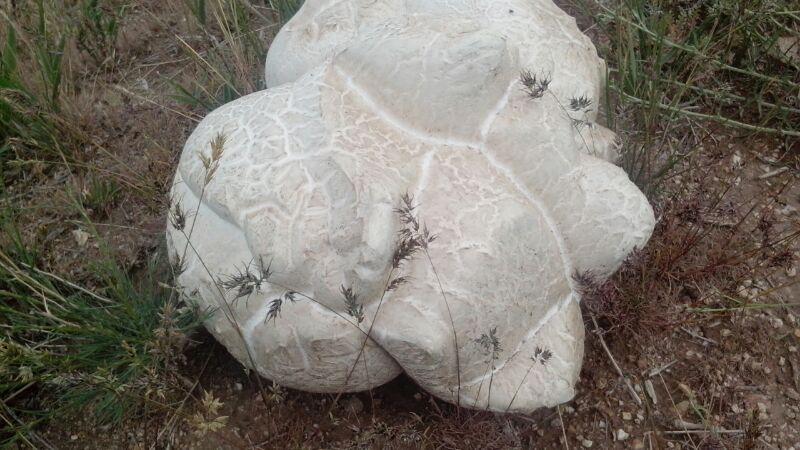 قارچ طبیعی (7کلیویی)در روستا