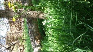 عکس از شکوفه و سرسبزی روستا